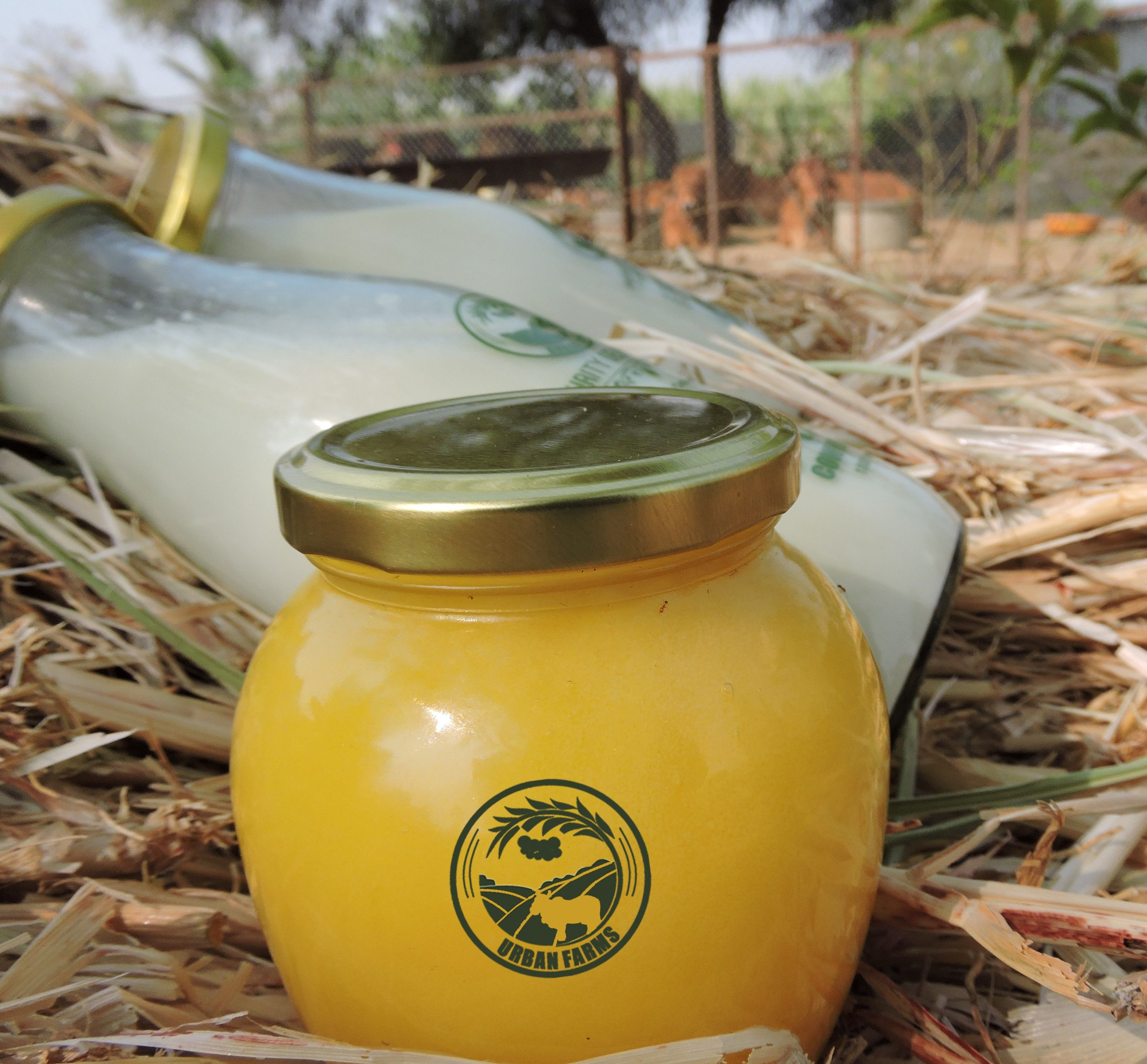 Fresh Desi Ghee In Urban Farm